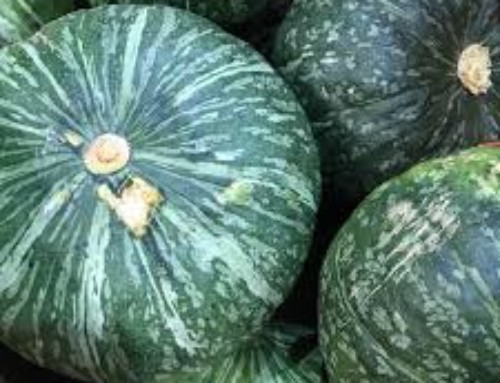 Have you tried kabocha squash? (Spoiler alert: it's delicious!)
